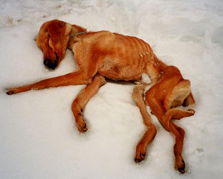 AFWeb_Content_Level 02_Primary_Animal Cruelty